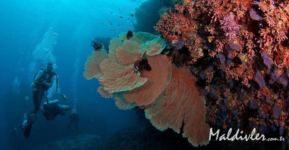 Maldivler 'de en iyi 5 dalış oteli